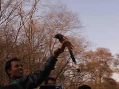 Más vale pájaro en mano...