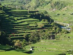 Terrazas en Hapao