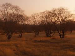 árboles pelados en el parque