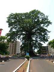 El cotton tree en Freetown