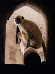 Monos en el templo