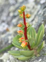 Planta en el Picacho