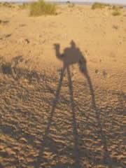 La sombra del camello es alargada