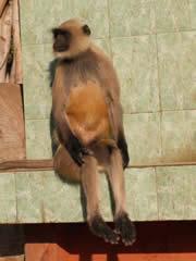 Mono relajado a la entrada del parque