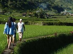 Caminando entre las terrazas en Hapao