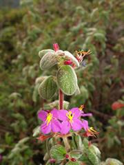 Flores del bosque nuboso