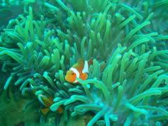 Misión Cumplida. Encontré a Nemo