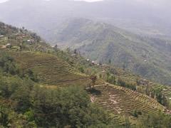 Cultivos en terraza