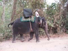 Elefante en Phnom Bakheng