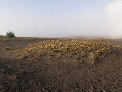 Vegetación el el Mar de arena