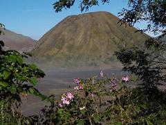 Volcán entre las flores
