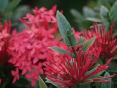 Flores en Mataking