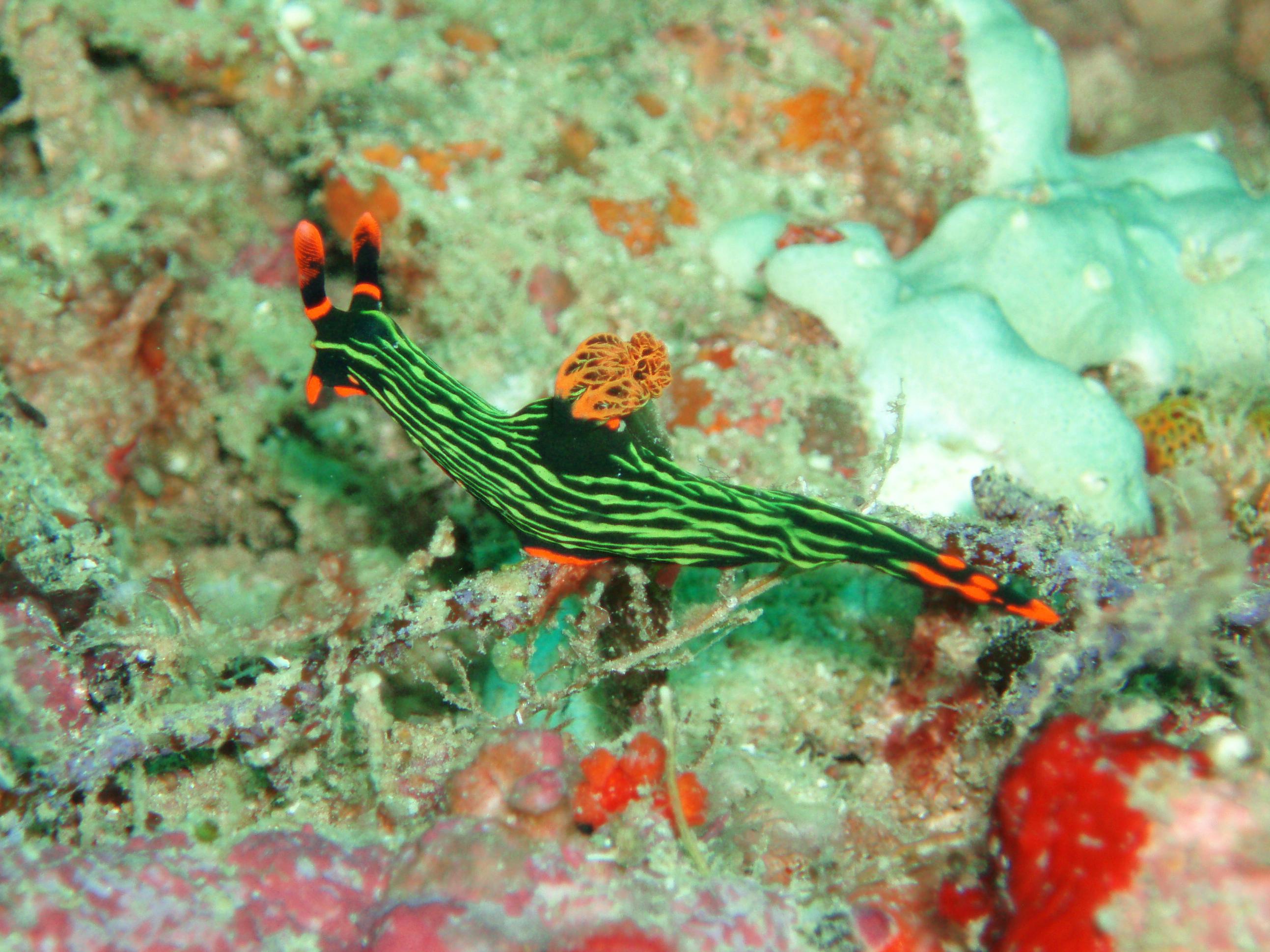 P2190097_Vagamundos_2006_Fav_Indonesia_Bali_Tulamben2