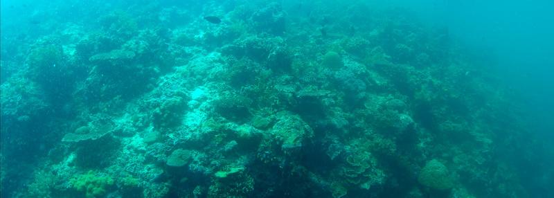 Panorámica Olympus submarina en Sipadan