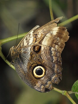 Mariposa en el jardín botánico de Medellín