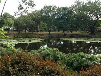 La laguna del jardín botánico de Medellín