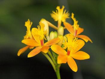 Orquidea del jardín botánico de Medellín