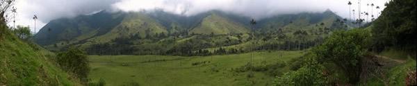 El valle del Cocora lleno de palmas y nubes