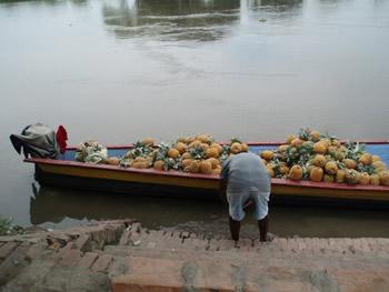 La barca con las piñas