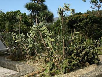 Zona de cactus del jardín botánico de Medellín