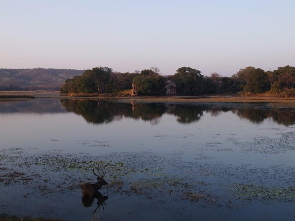 P1161459_V2007_Fav_India_Rajastan_Ranthambore
