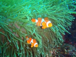 Buceo Vagamundos Filipinas 2