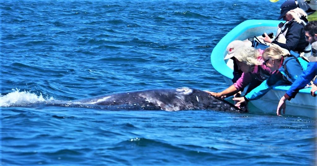 P4020392 Kuyima Laguna de San Ignacio
