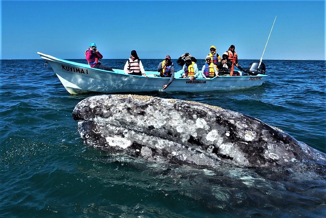 P4030294 Kuyima Laguna de San Ignacio