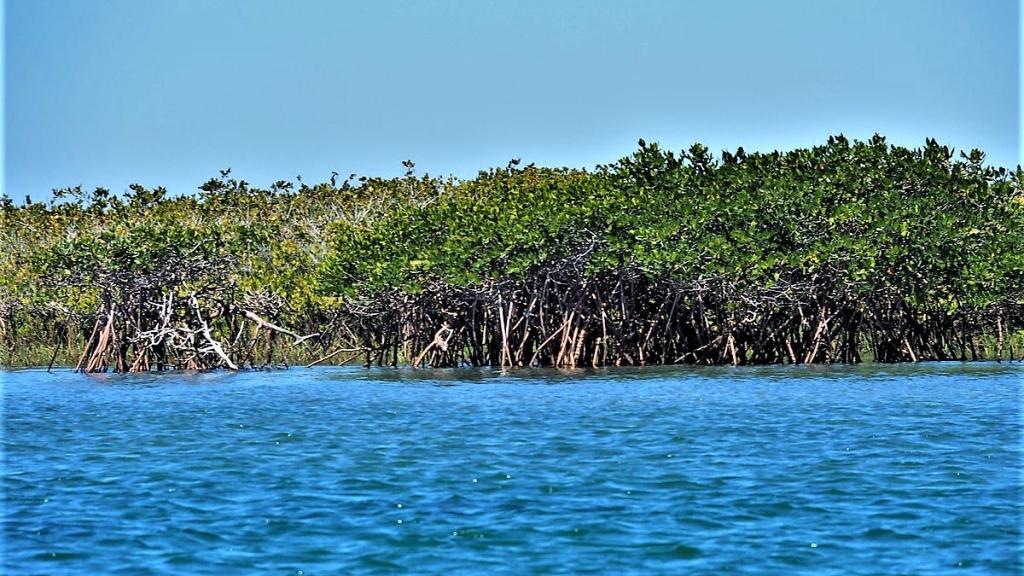 P4030355 Kuyima Laguna de San Ignacio